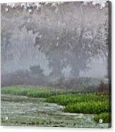 Morning Fog At Brazos Bend Acrylic Print