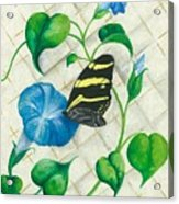 Morning Glories And Butterfly Acrylic Print
