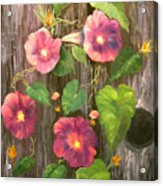 Morning Glories Acrylic Print