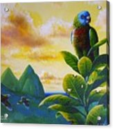 Morning Glory - St. Lucia Parrots Acrylic Print