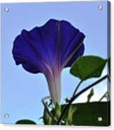 Morning Glory Sky Acrylic Print