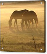 Morning Grazing Acrylic Print