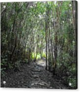 Morning Hike On Waihee Acrylic Print