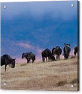 Morning In Ngorongoro Crater Acrylic Print