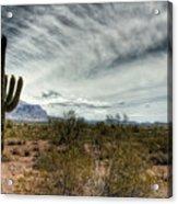 Morning In The Desert Acrylic Print