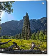 Morning In The Meadow Acrylic Print