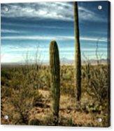 Morning In The Sonoran Desert Acrylic Print