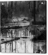 Morning In The Swamp Acrylic Print