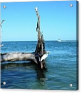 Morning On Longboat Key Acrylic Print