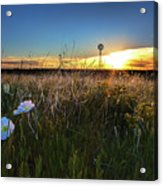 Morning On The Grasslands Acrylic Print