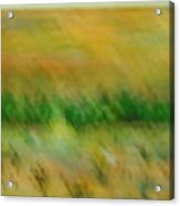 Morning On The Lake With Whooping Cranes Acrylic Print by BJ Abrams