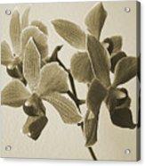 Morning Orchid Acrylic Print by Ben and Raisa Gertsberg