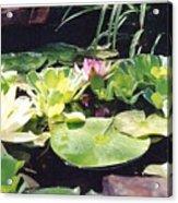 Morning Pond Acrylic Print