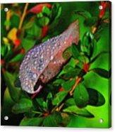 Morning Rains Acrylic Print