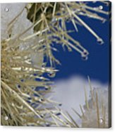 Morning Snow On Cactus Spines #1 Acrylic Print