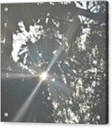 Morning Star 16-01 Acrylic Print