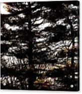 Morning Sunlight Through The Pines Acrylic Print