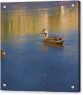 Morning Swim Acrylic Print