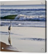 Morning Walk At Ormond Beach Acrylic Print