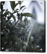 Morning Web With Dew Acrylic Print