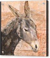 Moroccan Donkey Acrylic Print