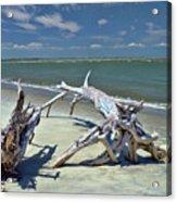 Morris Island Driftwood Acrylic Print