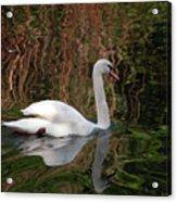 Mosaic Curious Swan  Acrylic Print