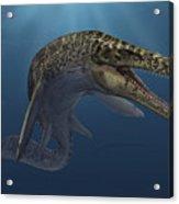 Mosasaurus Hoffmanni Swimming Acrylic Print