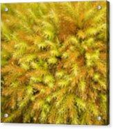 Moss Abstract Acrylic Print