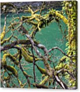 Moss And Trees Acrylic Print