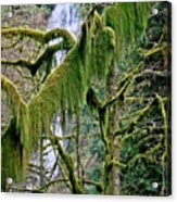 Moss At Munson Creek Acrylic Print