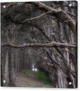 Moss Beach Trees 4191 Acrylic Print
