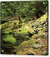 Moss By The Stream Acrylic Print