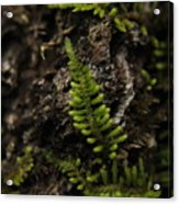 Moss Colony Acrylic Print