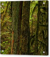 Moss Covered Giant Acrylic Print