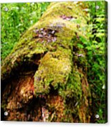 Moss Covered Log 3 Acrylic Print