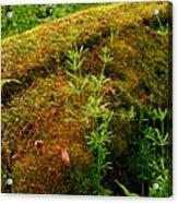 Moss Covered Log Acrylic Print