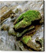 Moss Covered Rock Acrylic Print