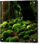 Moss Covered Rocks And Tree Yosemite Np California Acrylic Print