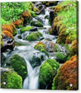 Moss Covered Stream Acrylic Print