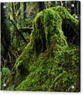 Moss Covered Tree Stump Acrylic Print