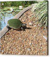 Moss Covered Turtle Acrylic Print