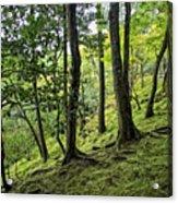 Moss Forest - Ginkakuji Temple - Japan Acrylic Print