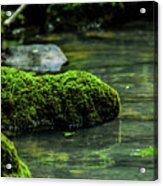 Moss In A Spring Acrylic Print