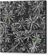 Moss Near Mirror Lake Acrylic Print