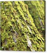 Moss On A Cedar Acrylic Print