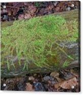 Moss On A Log Acrylic Print