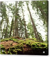 Moss On A Log Under The Cedars Acrylic Print