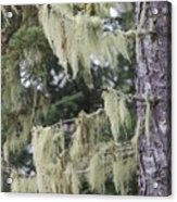 Moss On Pine Acrylic Print