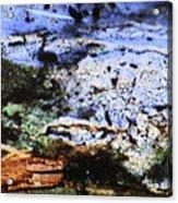 Moss On Wood Acrylic Print